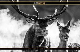 Kronvildt og debat om jagt