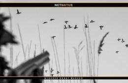 DOF og jagt på ænder