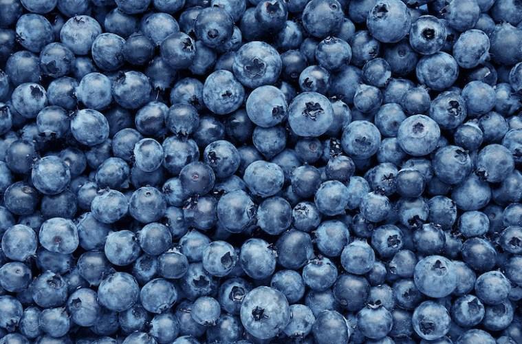 Nu kan der plukkes blåbær