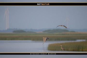 Fugle og vindmøller