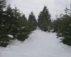 Skov/frijord