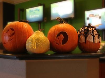 All Contestant's Pumpkins