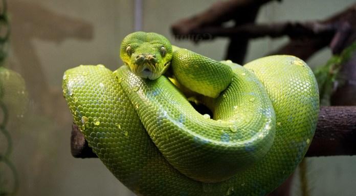 python zdjęcie