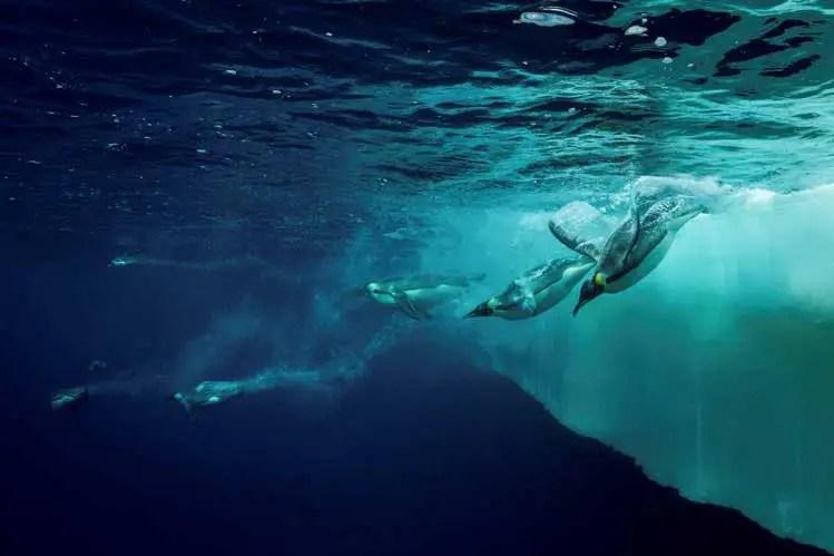 Gombessa-III---Expedition Antarktis