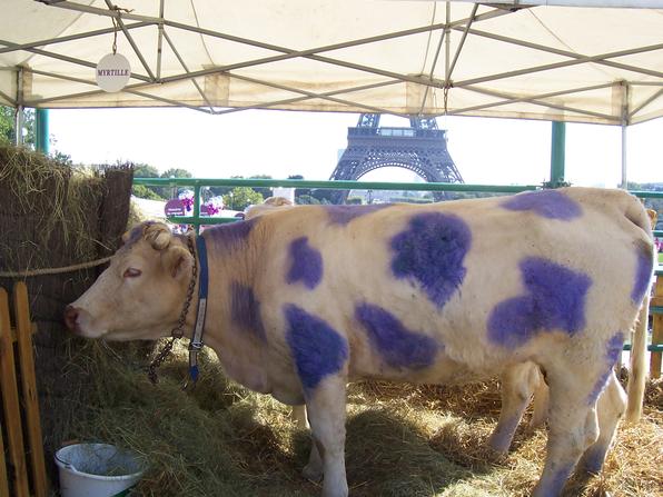 Lebende Milka Kuh in Paris