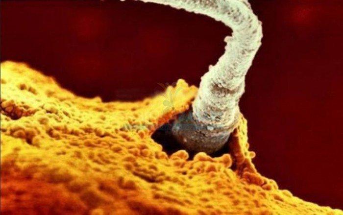 magazine-life-evolution-embryon-spermatozoide-feconde-ovule