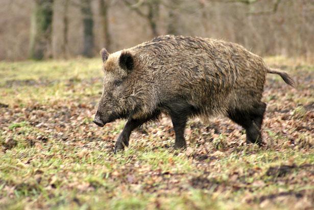Réunion de la société de chasse de Crimolois