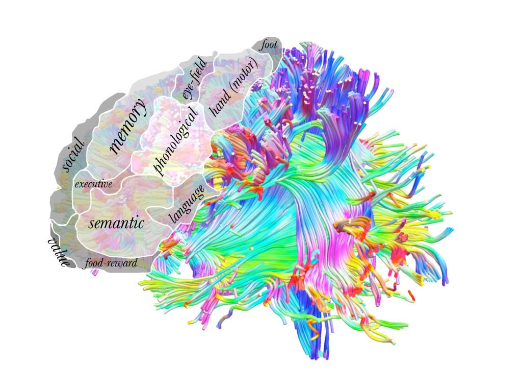 brain art competition 2017 the neuro bureau