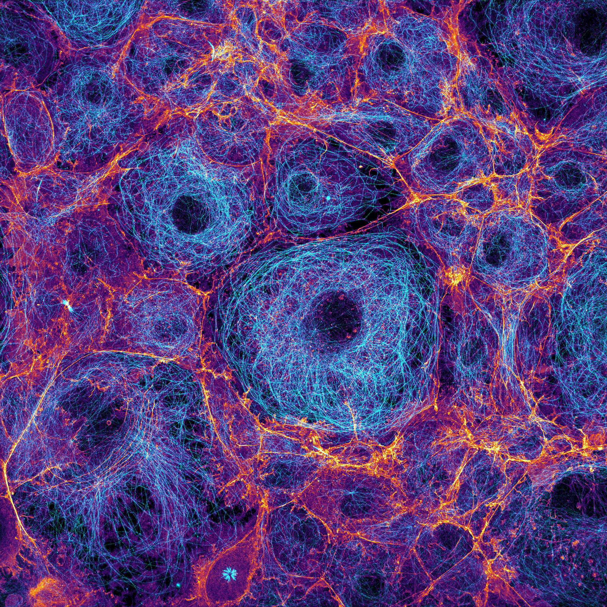 confluent COS cells labeled for actin (fire) and microtubules (cyan)