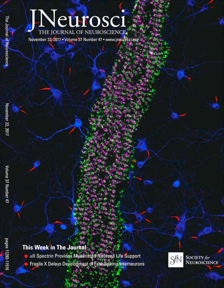 2-color PAINT image of alpha2-spectrin (magenta) and ß4-spectrin (green), cover of J. Neuroscience, 22 Nov. 2017