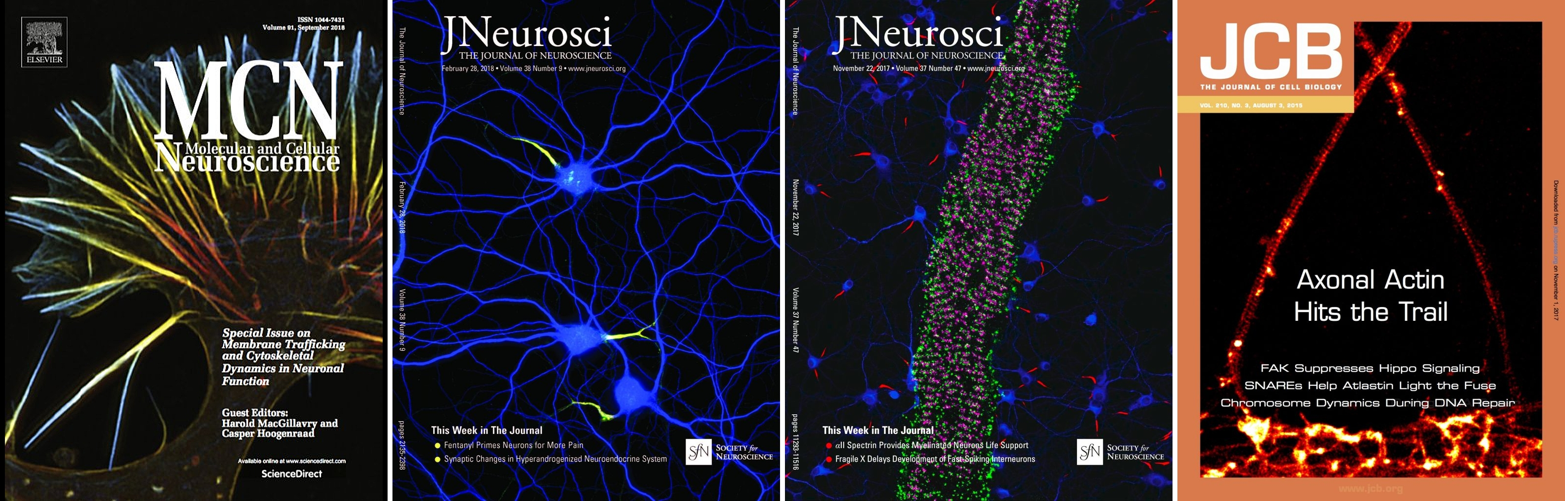 Covers from the lab