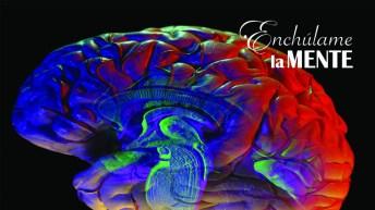 ¿Por qué tenemos un cerebro?