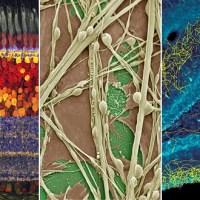 دوره آموزشی مبانی علوم اعصاب و دانش مغز/آشنایی با روشهای تحقیقاتی (دوره پنجم)