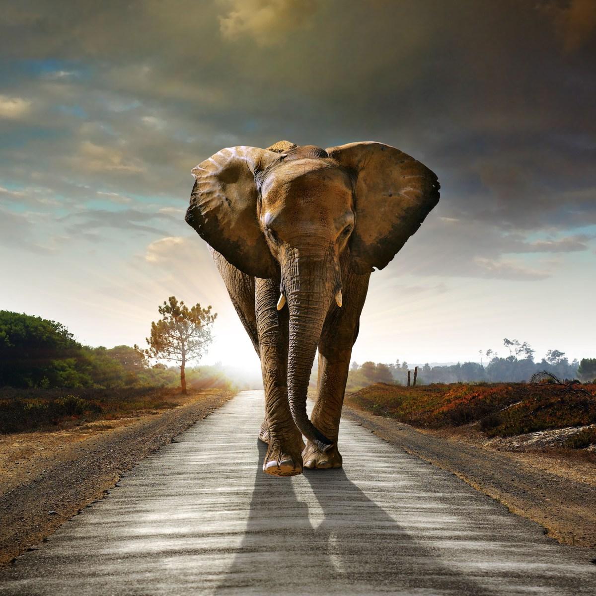 Ο Δεμένος Ελέφαντας