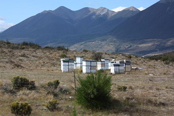 Bienenstöcke an der Strecke