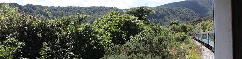 Dichte Vegetation am Wegesrand