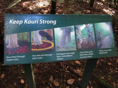Schild wie sich Wanderer im Kauri Wald zu verhalten haben