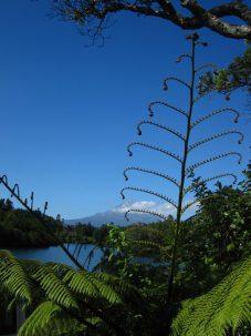 Lake Mangamahoe mit Farn