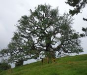 Party-Baum in Hobbingen