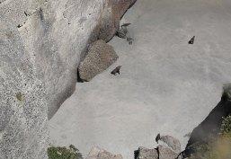 Robben Familien Leben