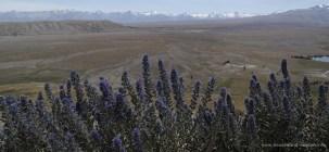 Der Blick schweift über die kahle Hochebene bis zu den Gipeln der Southern Alps.