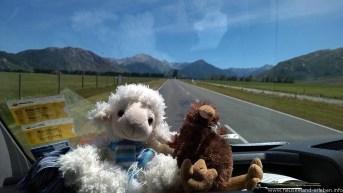 Schaf und Kiwi auf großer Fahrt am Arthur's Pass