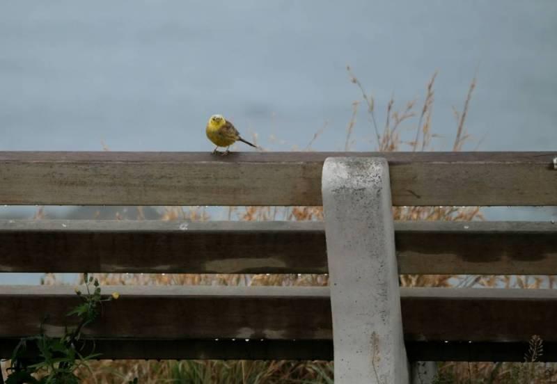 Ein Vogel sitzt auf einer Bank und singt - Kaikoura Peninsula