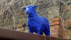 Schaf im Hof des Raskollnikoff