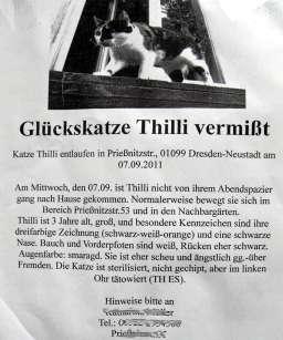 2011-09-20-Katze4