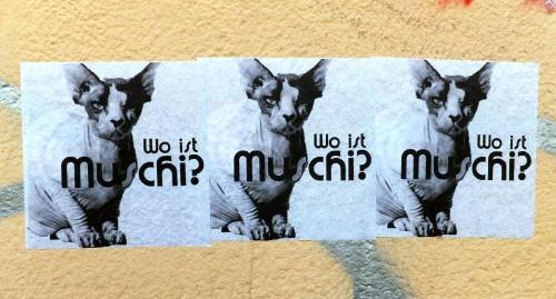 Katzensuche, künstlerisch interpretiert.