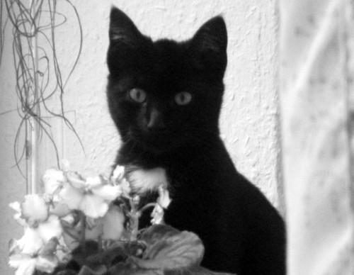 Kleine, schwarze Katze
