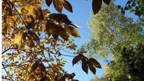Ergänzende Herbstimpression. Danke an S.Ebnitzer.