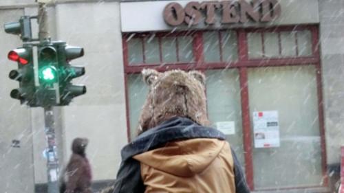 Bären-Alarm - gesehen auf der Bautzner Straße.