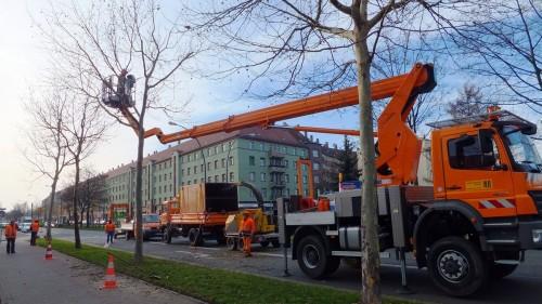 Baumpflege an der Hansastraße