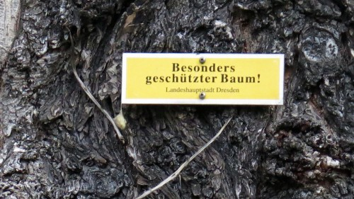 """Aus dem """"Besonders geschützten Baum"""" ist ein Naturdenkmal geworden."""