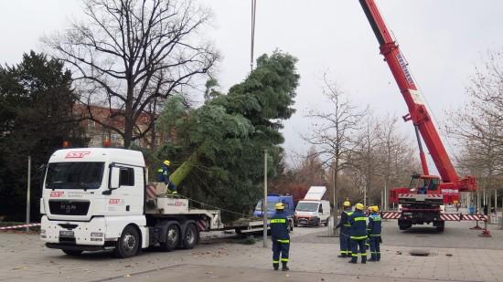 Ab halb 12 wurde der Baum aufgestellt.