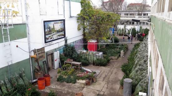 1.800 Bäume stehen abholbereit an der Stetzscher Straße
