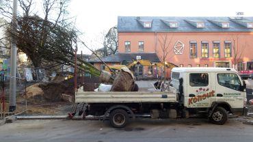 Auf dem Laster sieht der Baum noch richtig groß aus.