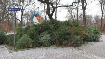 Weihnachtsbaum-Lagerstelle am Alaunplatz