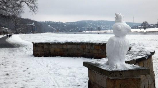 Schneevogel an der Elbe