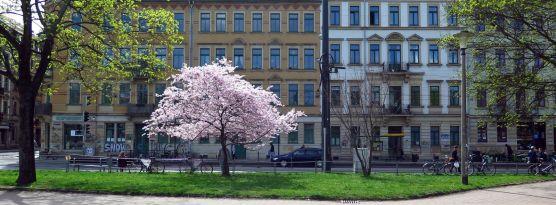 Alaunplatz im April