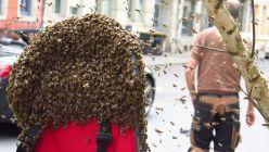Bienenschwarm an der Louisenstraße