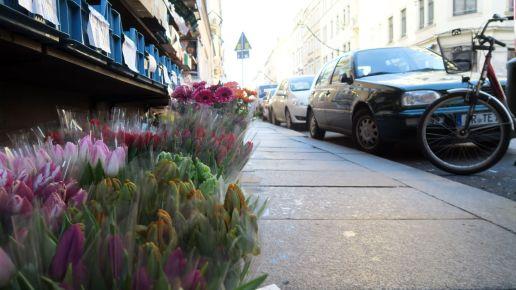 Tulpen von Bui - immer wieder gut.