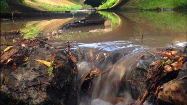 Prießnitz wieder mit Wasser - Foto: Ronny Rozum/PULS13