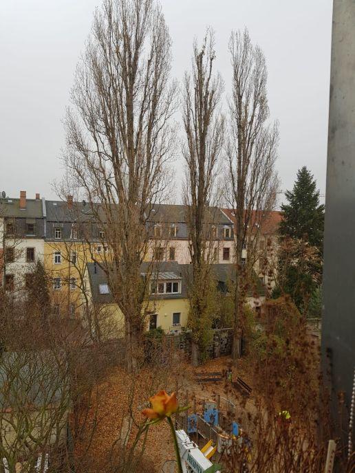 Spielplatz mit Pappeln. Foto: F. Hertel