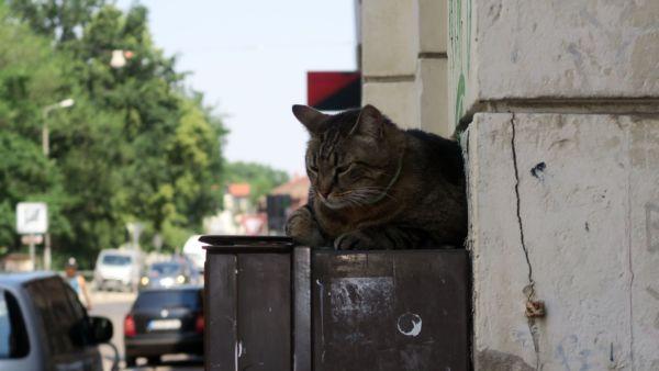 Kami-Katze als Schatten-Parker