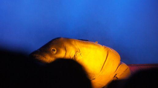 Fischmensch