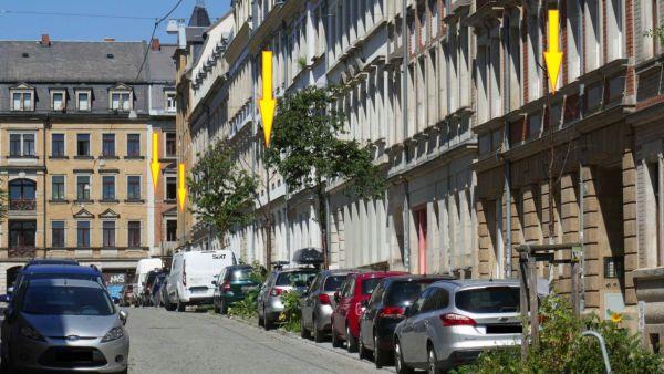 Baumsterben an der Schönfelder Straße