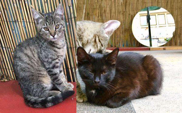 Vermisste Kätzchen