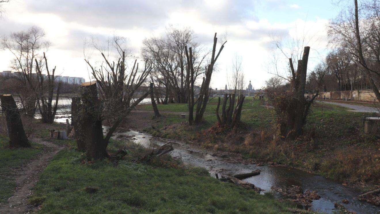 Prießnitzündung mit auf Stock geschnittenen Bäumen